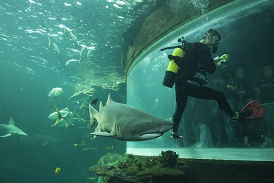 Nausicaä - plongeur & requin - A ROSENFELD